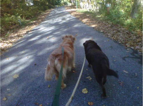 Dog Walking, Cat Care and Pet Care